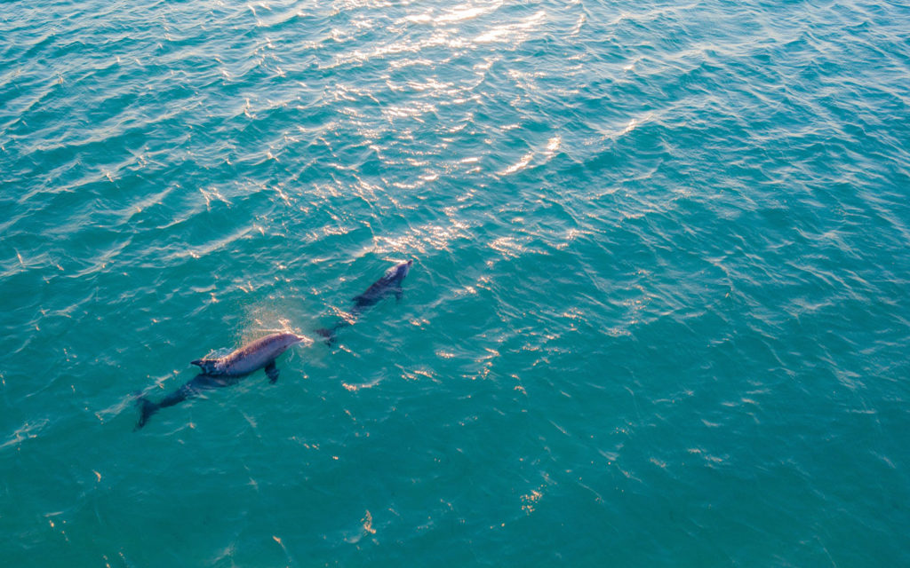 Dolphin Watch in Guam